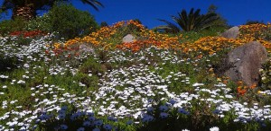 Bloemen tuin The Art of Joy in de lente Monchique Portugal